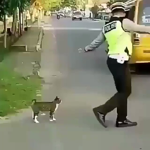 Image for the Tweet beginning: This police officer stopping traffic