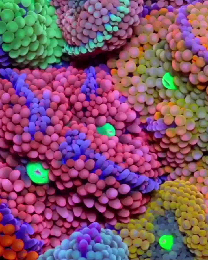Image for the Tweet beginning: With coral as their primary