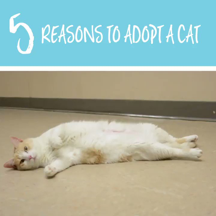 #5: You're saving lives!   Adopt a cat or kitten for free at any LifeLine shelter this July!