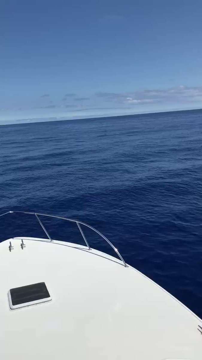 Madeira - Blue Marlin feeding next to the Tightline.