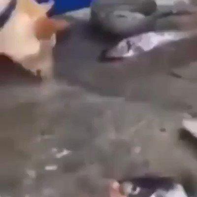 Balığı kurtarmaya çalışan köpek..