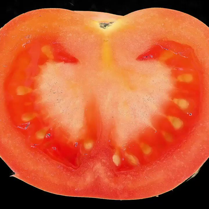Happy #FungusFriday! Unlike plants, molds don't grow from seeds, they grow from tiny spores that float around in the air. Mold thrives on high-acid foods and soft fruits, so be sure to keep an eye on your tomatoes! 🍅#Science