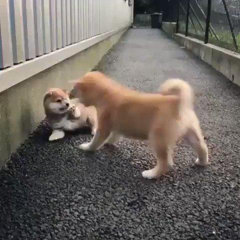 可愛い喧嘩