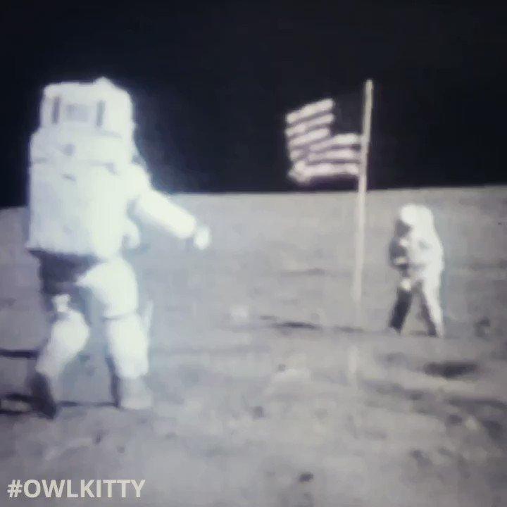 Fake Meows #nasa #MoonLanding #owlkitty #moon