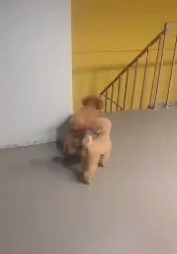 Me muero, el perro se esconde para asustarlo.