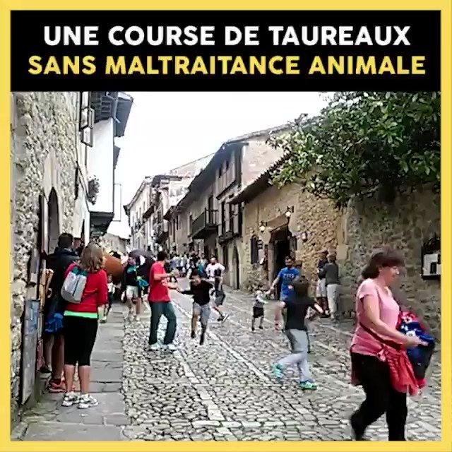 Enfin une course de taureaux sans violence et sans danger… pour l'Homme comme pour les animaux !