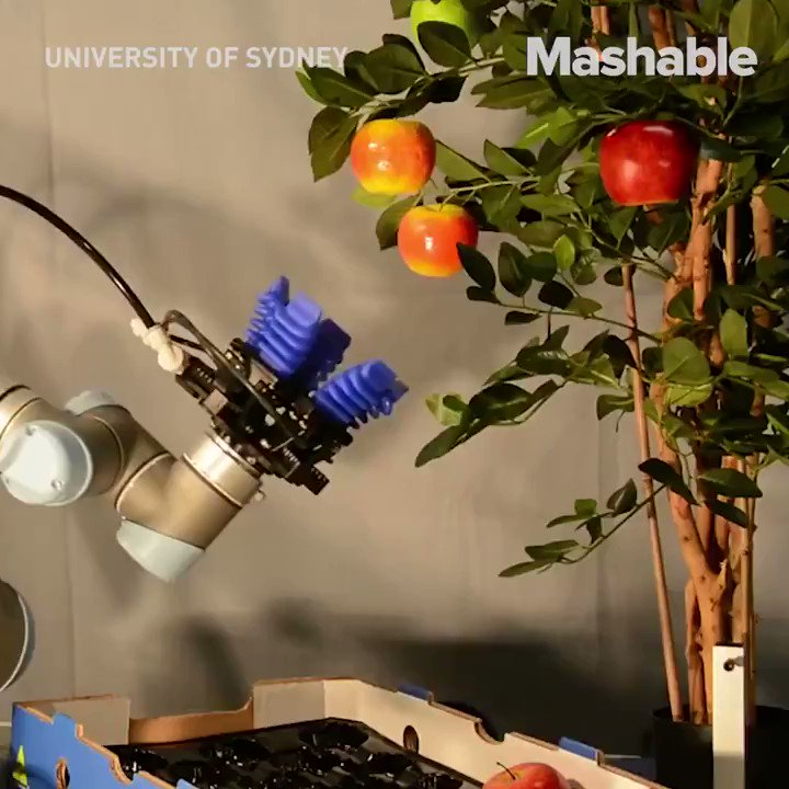 These farm-loving #robots could change the future of #agriculture. Want to be part of it? Contact us today! #aijobs #ai #aiskills #artificialintelligenceai #artificialintelligence #machinelearning #machinelearningalgorithms #futuretechnology #computerscience #computerengineer