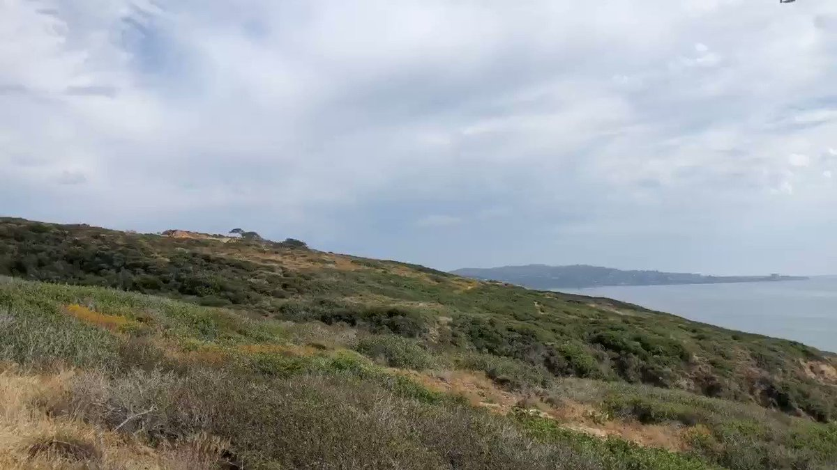 What to do on a @DelMarRacing dark day? So many choices. Today it's Torrey Pines State Natural Reserve hiking trails.