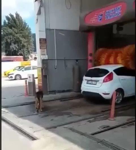 El perro de Macri 😂
