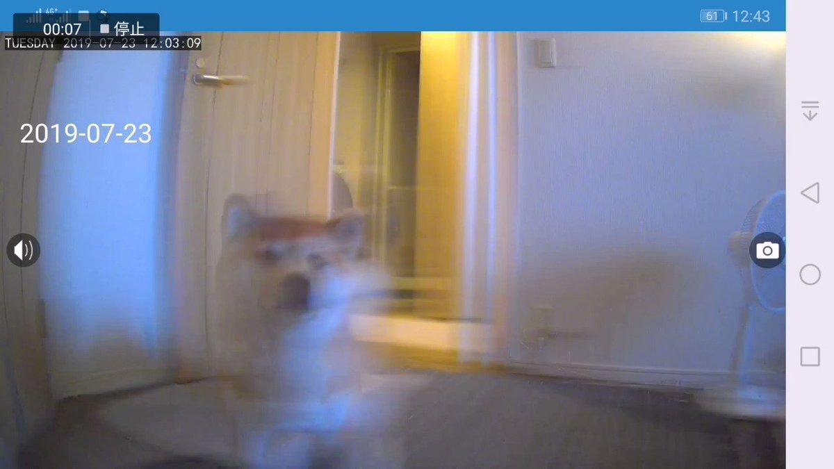 ネットワークカメラに気がついてしまった犬…。