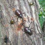 カブトムシが集まる木には?熱い戦いが繰り広げられていた!