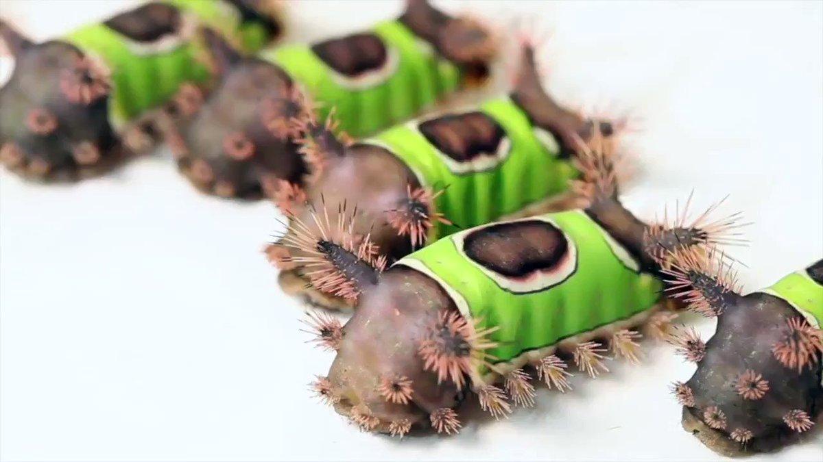 閲覧注意!色とりどり!個性的な毛虫たち。
