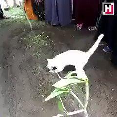 飼い主のお墓を離れようとしない猫?