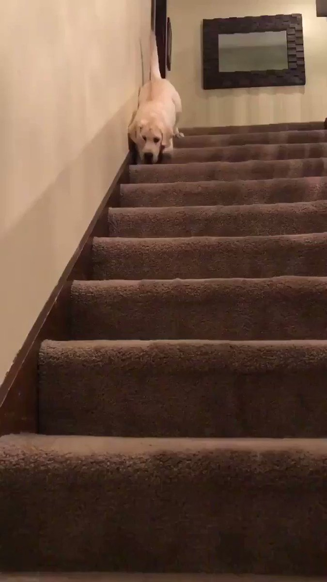 This is Jack. He discovered a new way to get downstairs. 14/10 very innovative good job Jack