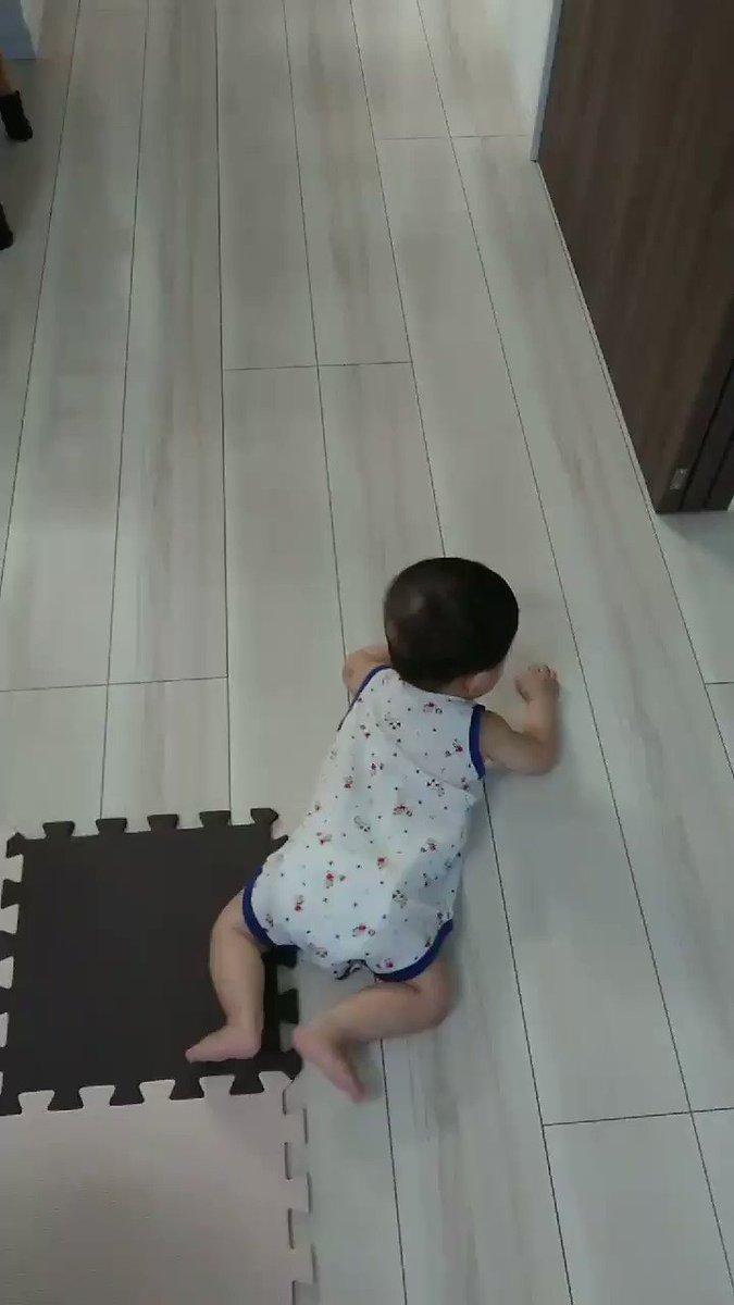 息子氏、だいぶズンズン進むようになってきました……?サークルの中にいてほしいけど、しばらくすると「出せー!」って怒るから床の掃除頑張ります???