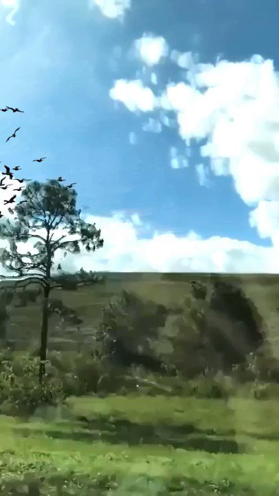 guy takes slow mo vid of passing birds from a train