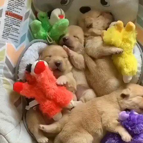 寝てる姿がかわいい✨