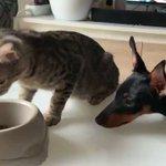 一粒だけあげる!つい笑顔になってしまう猫と犬の微笑ましいやりとり!