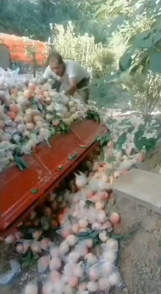 一方面,果农因为没有人来收水果,或者因为水果商把价格压得低到他亏损的线内,不愿贱卖,宁可扔掉。 另一方面,城市的市民,因为水果实在太昂贵(很多地方一个苹果四五块),根本买不起水果。 什么情况导致的?