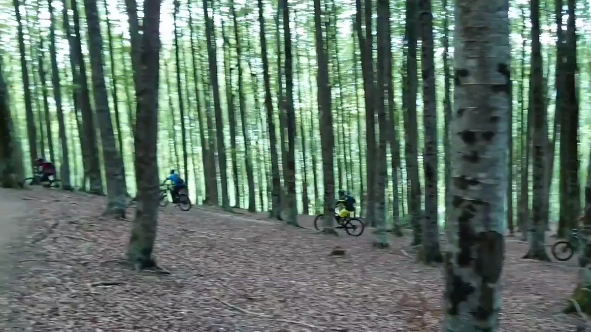 Los bosques Navarra son un espectáculo, especialmente los hayedos que son mis favoritos. Estamos en Eugi donde hay una zona de enduro maravillosa gracias a los chicos de @EREMUATRAILBTT que se lo han currado de miedo! @RideCannondale @BicisCarlos