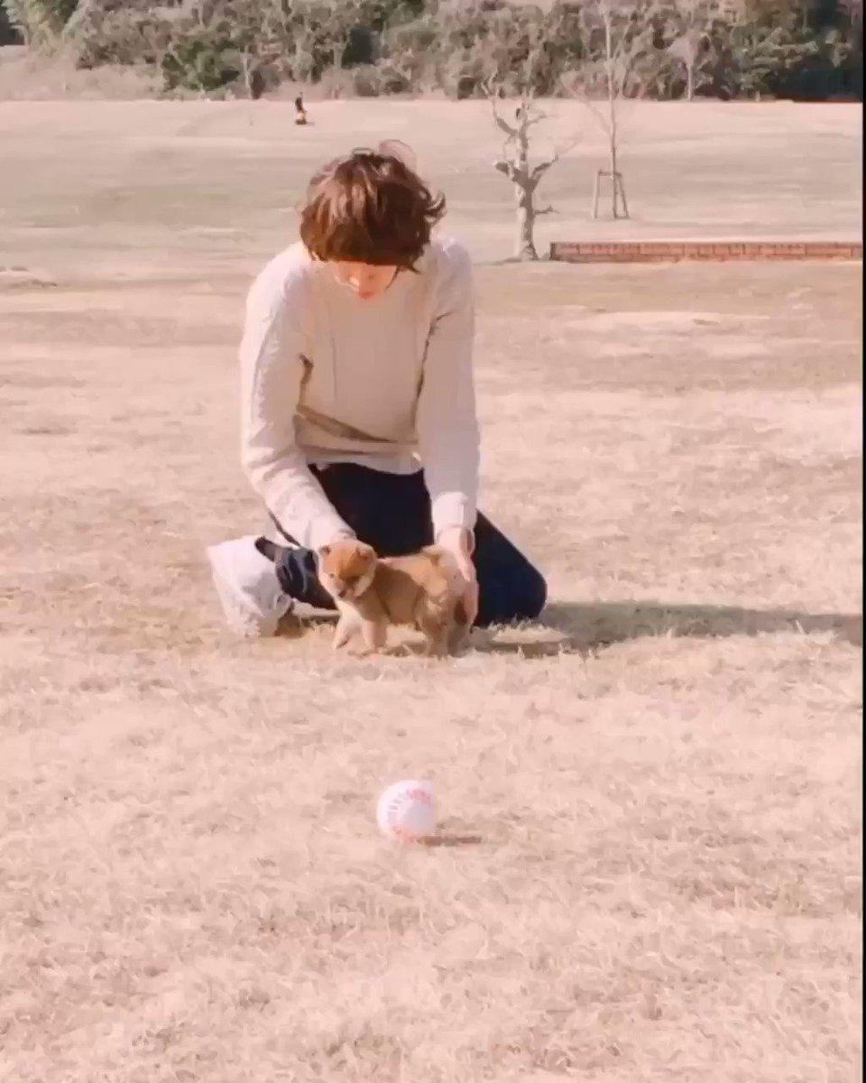 うちの柴犬がよちよち歩きで白球⚾️を追いかけてた頃の動画をどうぞ
