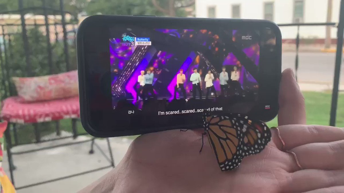 never thought i'd see the day where a butterfly watches bts perform butterfly but here we are