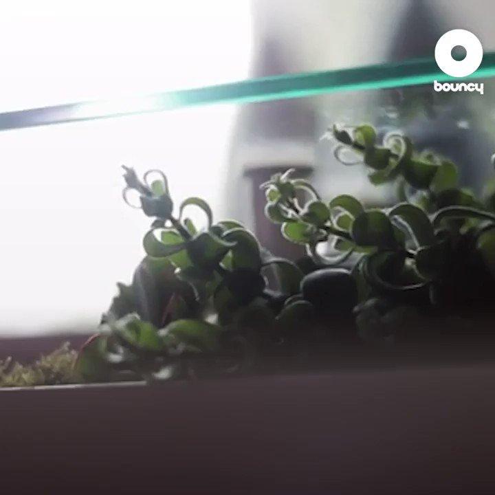 リビングから自然を感じよう!by BloomingTables詳しくはこちら👉#オシャレ #自然 #緑