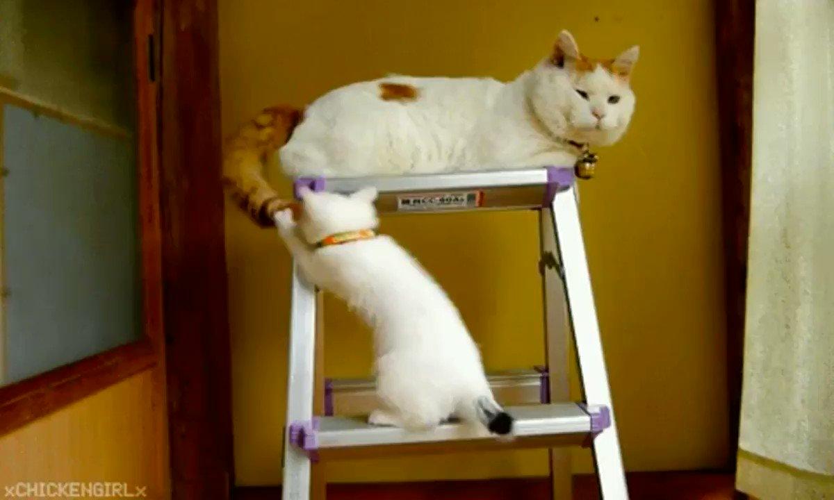 Смешные гифки с котейками