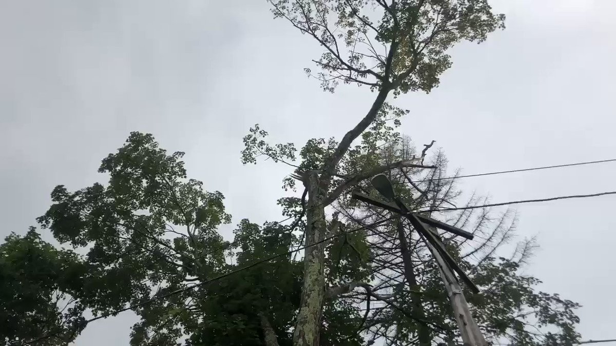 VIDEO NOW: Trees down in Douglas, Mass. Neighbors suspect lightning/heavy wind is to blame. Thousands are in the dark at the moment according to National Grid. @wpri12