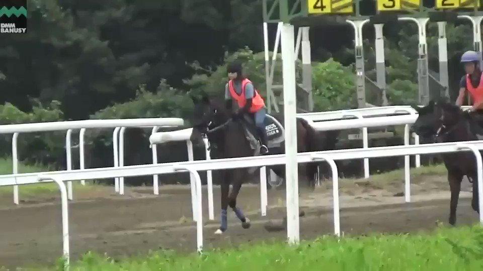 8月16日の #キタノブルー です。 1400m周回コースで1ハロン(約200m) 15秒程度の調教を3ハロン行いました。順調にメニューをこなせています。  ▼本馬の情報はこちら🐴 【https://t.co/sNoIqeLcna】  #ショウナンアデラ 全弟 #国枝栄 厩舎 #ディープインパクト産駒 #バヌーシー