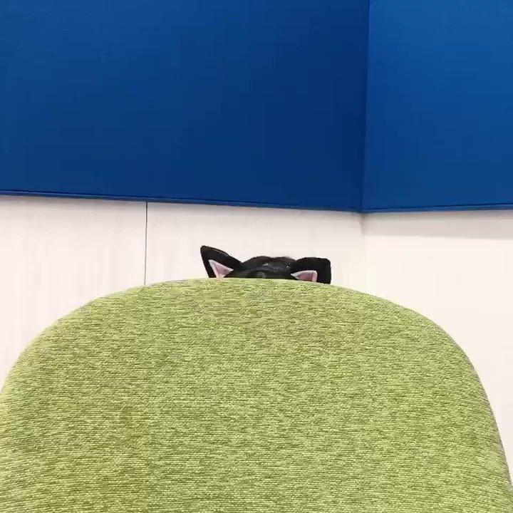 8月22日は #ひにゃた坂😸一回引っ込んだと思ったらまた出てきました🐈が、逃してしまいました😔◎amazon ◎ローソン・HMV ◎楽天 #日向坂46 #日向坂46写真集 #青春 #立ち漕ぎ #ひにゃた坂 #小坂菜緒