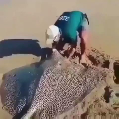 RT @SavageMemeHUB: Y'all forgave this nigga for what he did to Steve Irwin?  https://t.co/nDiCZPcDiD
