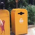 カラスが人間のゴミを拾ってゴミ箱に捨てるびっくり映像