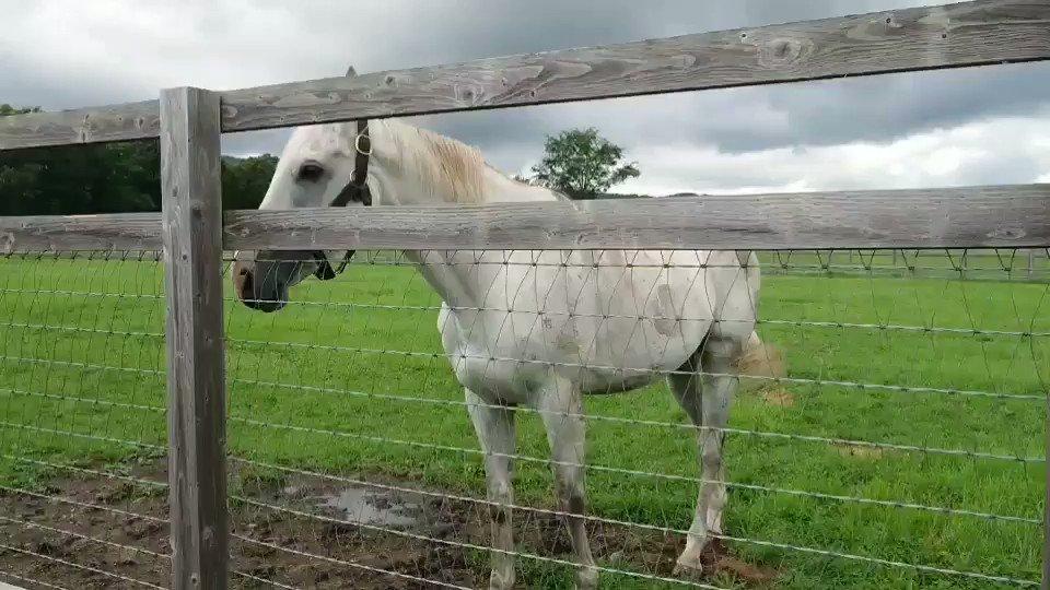 今、競馬仲間がビッグレッドファームに牧場見学行ってて  写真送ってくれました☺  まずはゴールドシップさんです ⬇⬇⬇