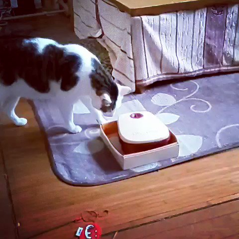 Cat Opens Automatic Feeder