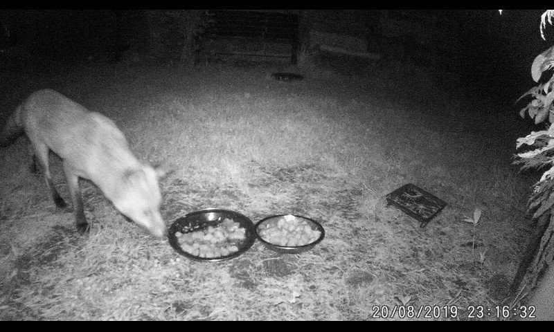 Blotch at the food now, then one of the Cubs appears from the right. https://t.co/1WUw5v1hCW