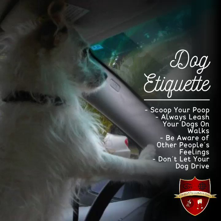 In honor of #NationalDogDay. Here are a few etiquette tips   - Scoop Your Poop - Always Leash Your Dogs On Walks - Be Aware of Other People's Feelings - Don't Let Your Dog Drive    #DogEtiquette #MindYourManners #MannersMonday #EtiquetteExpert #TobeyHirst https://t.co/iW8LdyiSE4