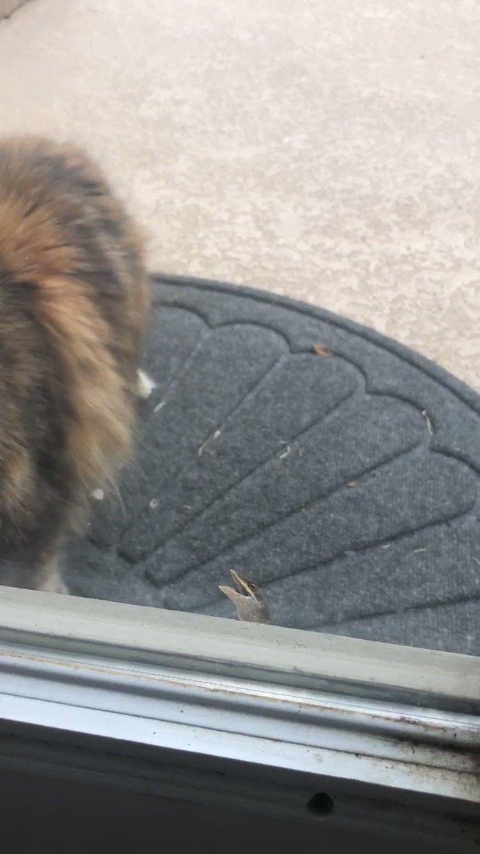 猫の鼻を噛むトカゲ