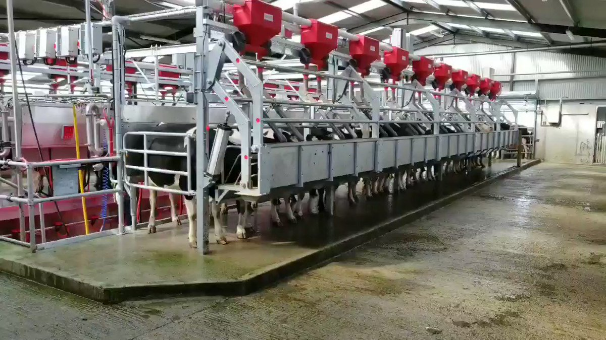 Down at a new 20-unit rapid exit parlour for a 250 cow herd in Tipperary today, first time seeing one in action, some really nice aspects of the overall design! See next weeks @farmersjournal for all the details.