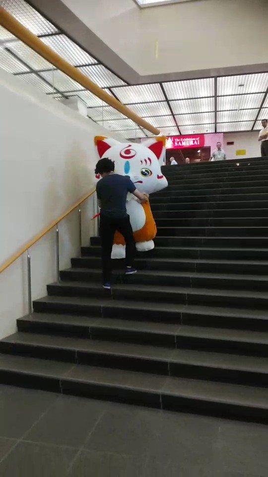 侍展の内覧会が終わったので、こんちゃんが階段降りるだけのサービス動画をどうぞ。