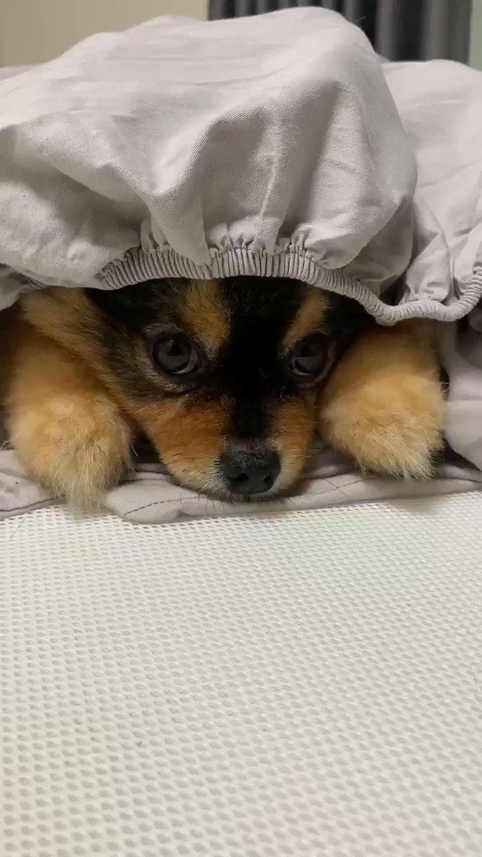 シーツを洗濯するため、剥がしている最中に、宅急便が訪問してきたので中断し、玄関に向かい、荷物を受け取り戻ると、給食帽らしき帽子かぶった犬がいた。動く様子が全くないのでしばらく放置しておこう。