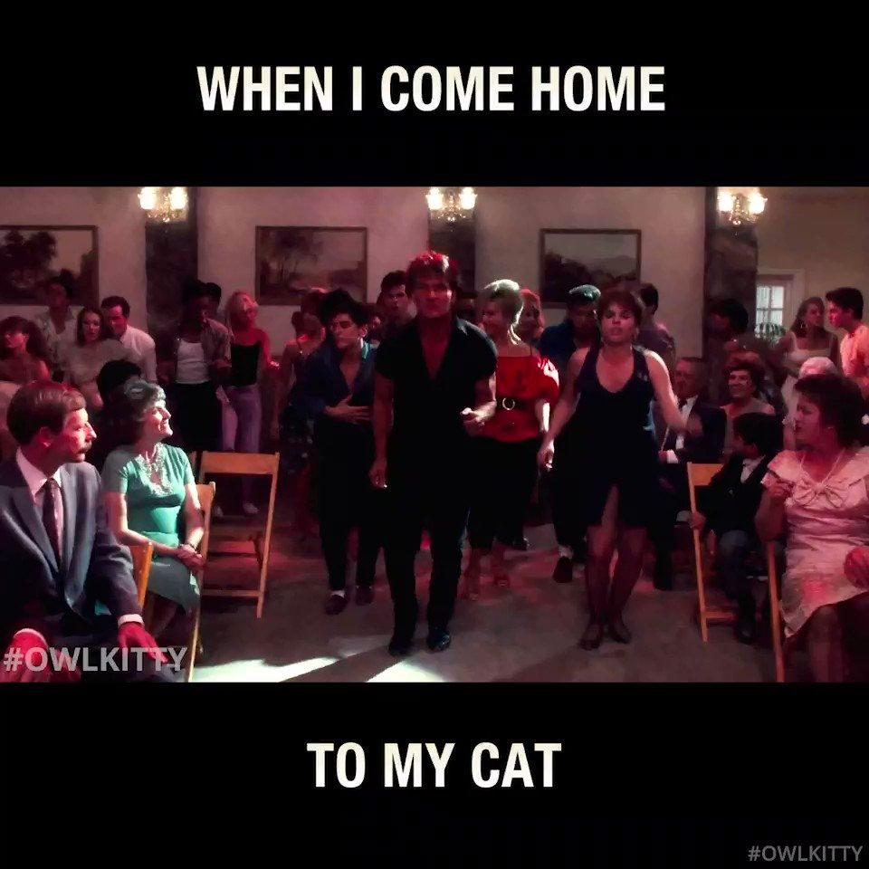 Nobody puts OwlKitty in a corner💃 #OwlKitty #DirtyDancing #CatsOfTwitter