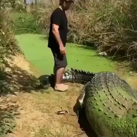 Video Of Terrifying And Monstrous Crocodile Goes Viral On Twitter. Should It Be Shot Immediately?