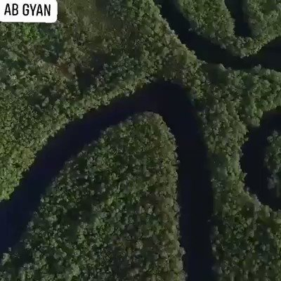 The Amazon Rainforest produces more than 20% of the world's oxygen and it's been burning. It's a home to more than 2,000 species of animals.Our hearts are hurting for the..... #AmazonRainforest 💚#rainforest #amazonrainforestburning #amazonrainforestfire #ABGYAN