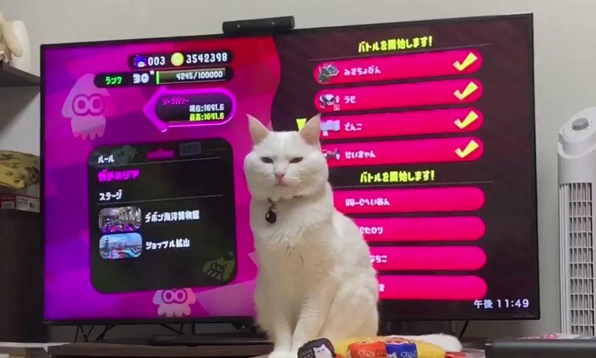 猫を飼ってるゲーマーあるある😭#Splatoon2 #スプラトゥーン2 #NintendoSwitch
