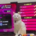 溜息。猫を飼ってるゲーマーあるある。確信犯の顔つきでこちらを見てる。