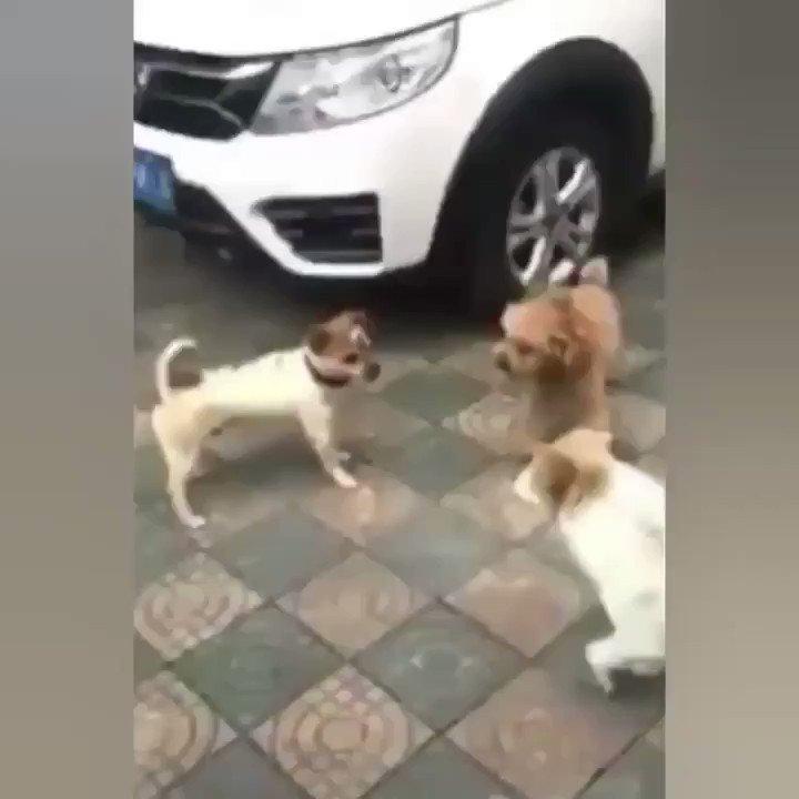 喧嘩からの、、、!