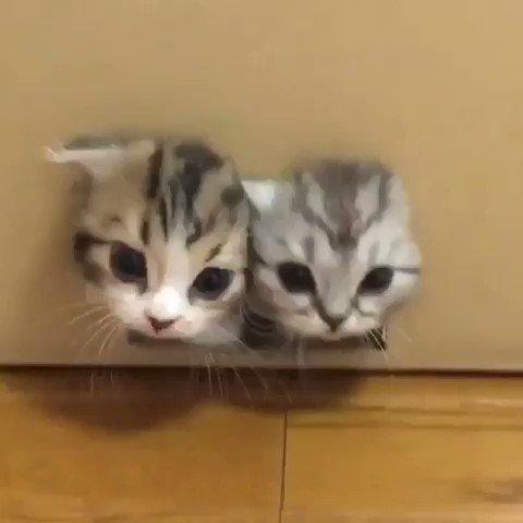 ⭐子猫がいっぱい ⭐