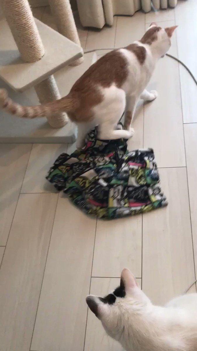 パジャマ連れまわし猫