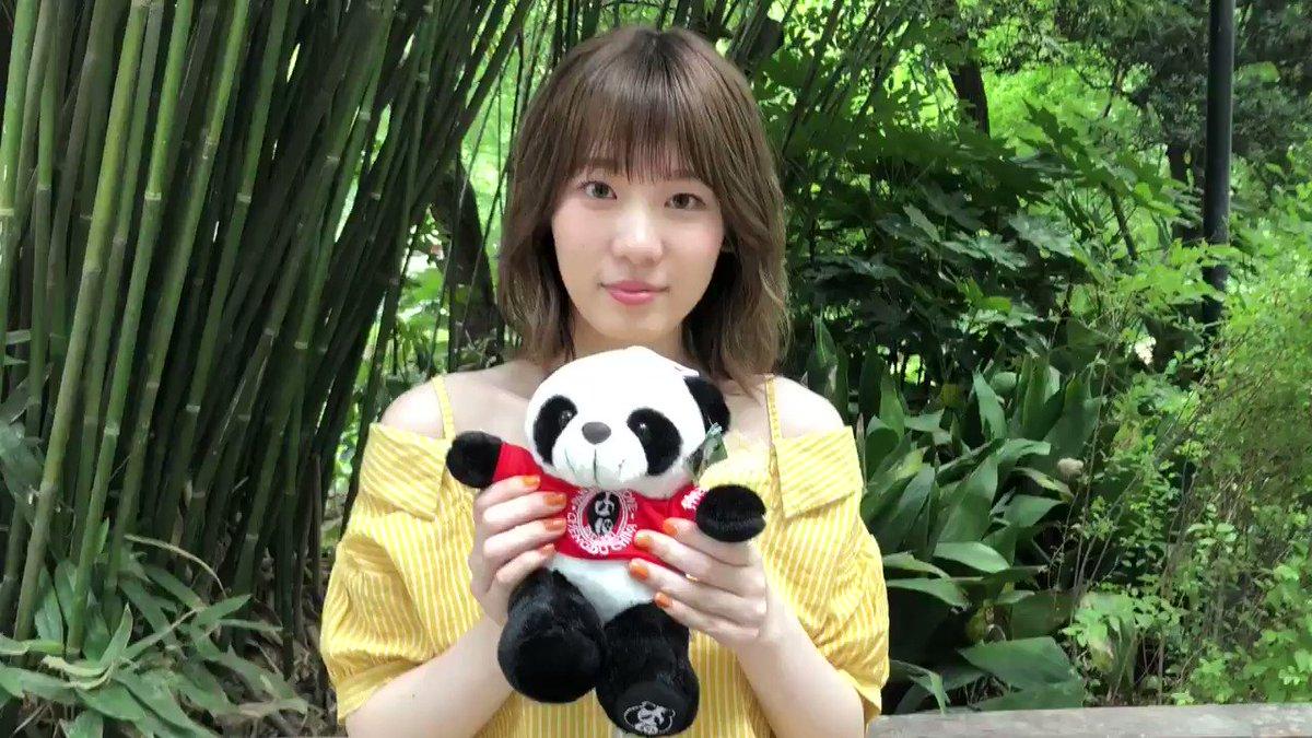 #みいちゃんの中国語講座 🗣みんな大好きパンダ🐼は「シェンマオ」🐼小池さんもパンダも可愛いですね😍🐼😍🐼#小池美波 #欅坂46 #みいちゃん #小池美波写真集 #みいちゃん写真集 #青春の瓶詰め